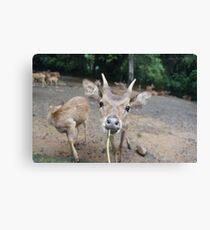 Cute Deer - Eating Vegetables Canvas Print