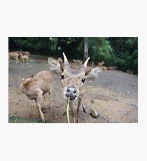 Cute Deer - Eating Vegetables Photographic Print