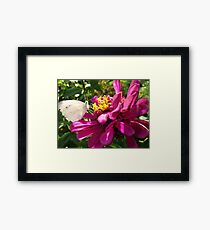 Insect Supper Framed Print