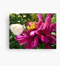 Insect Supper Canvas Print
