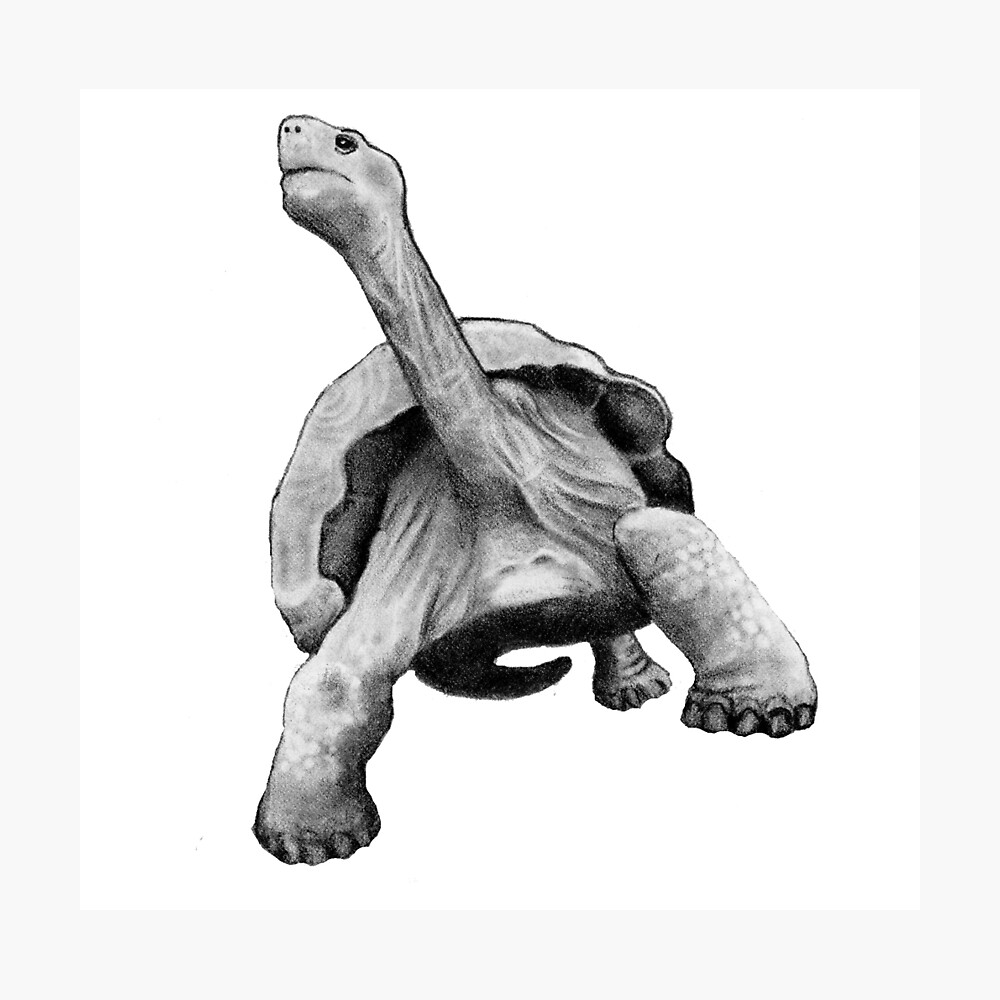 Turtle or tortoise hand drawn pencil art photographic print