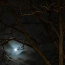 Full Moon Rising - 2 ©  by © Hany G. Jadaa © Prince John Photography