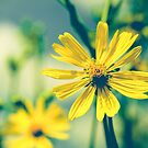 Hello Sunshine by OLIVIA JOY STCLAIRE