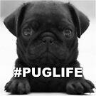 #PUGLIFE by MrPeterRossiter