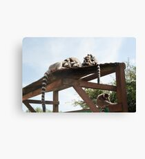 Sleeping Lemurs Canvas Print
