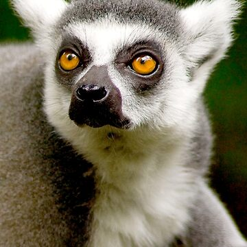 LEMUR-2 by IMPACTEES