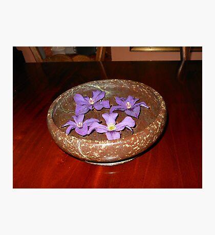 Die Schwimmer - purpurrote Clematis-Blüten Fotodruck