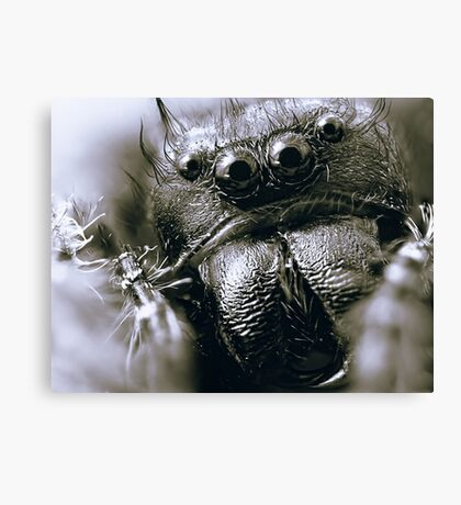 Those Crazy Jumping Spider Eyes Canvas Print