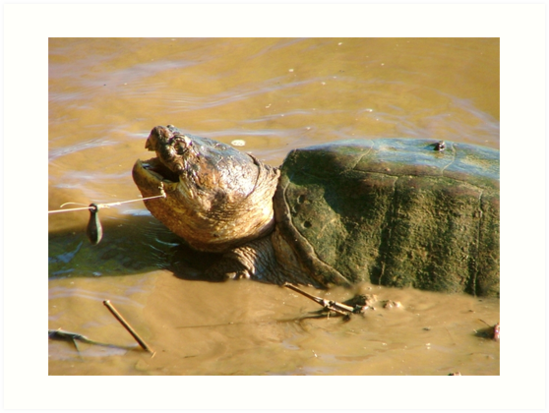 Snapping Turtle by Valeria Lee