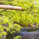 Zen bamboo fountain by Zoe Power