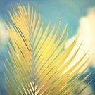Palm Softness by tropicalsamuelv