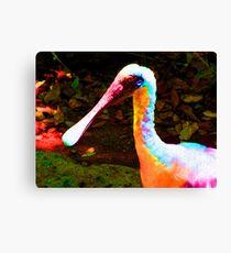 Duck Bill Canvas Print