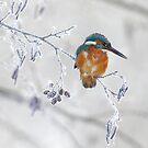 Ice bird by Remo Savisaar