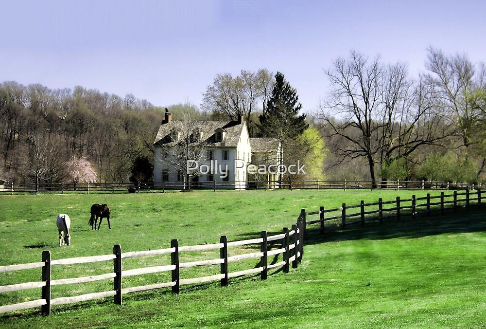 Chester County, Pennsylvania Horse Farm by Polly Peacock