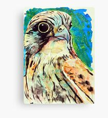 Nankeen Kestrel Canvas Print