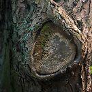 Tree Bark by Sarah Horsman