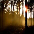Misty by cjohansson