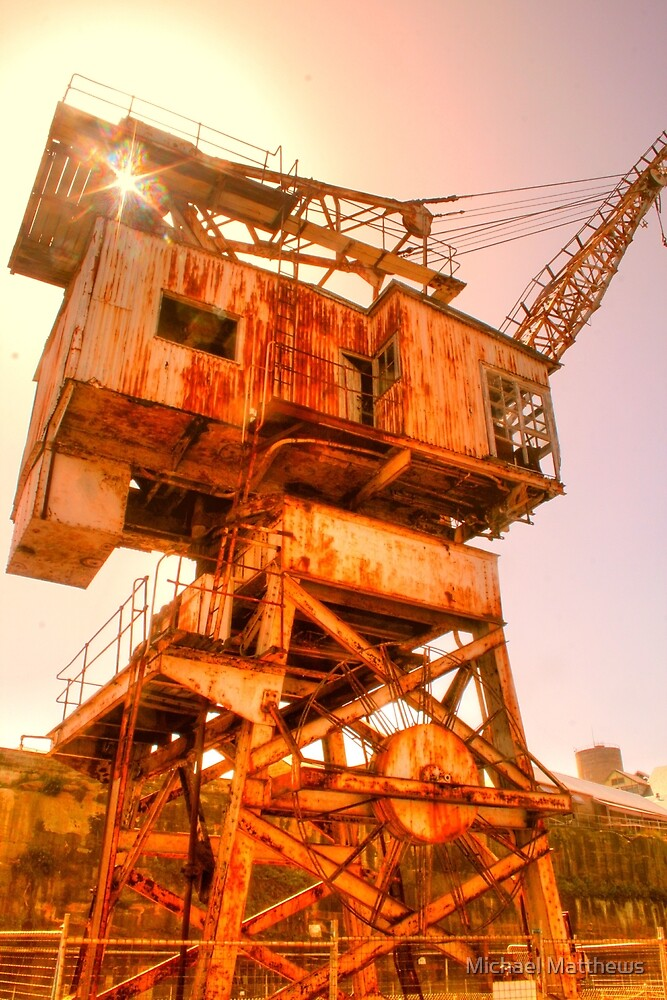 Cockatoo Crane sunshine by Michael Matthews