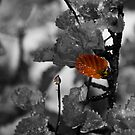 SPLASH OF FAGUS by Craig Harris