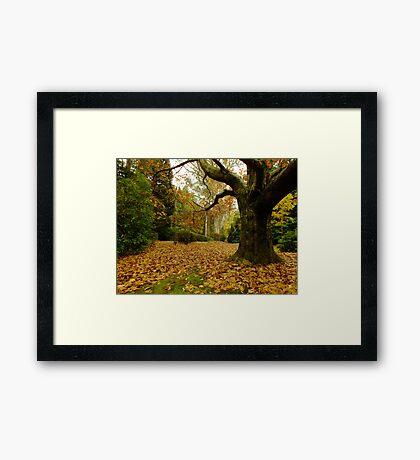 Breenhold Garden, Mount Wilson Framed Print