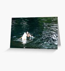 Amusing Ducks Greeting Card
