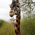 Two Headed Giraffe! by EF Fandom Design