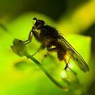 Spiky Fly by Mark Smith