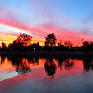 Lake Havasu Sunset by Christine Ford