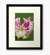 dried peony in the garden Framed Print