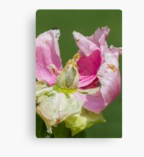 dried peony in the garden Canvas Print