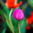 Tulip Abstract by Amy Jackson
