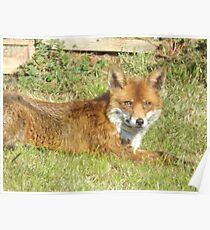 Freddie The Fox Poster