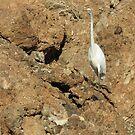 Havasu Heron by Christine Ford