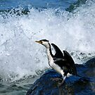 Little Pied Cormorant by looneyatoms