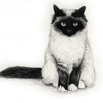Birman by abarsoski