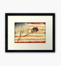 American Bald Eagle Salute Framed Print