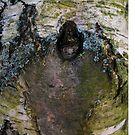 Tree Bark phone case by Sarah Horsman