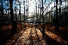 Winter Sun by Nigel Bangert