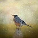 Robin by KathleenRinker