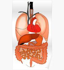 Internal Organs Poster