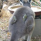 'WHAT A CATCH! A pair of Brown Headed Honeyeaters on Joeys back. Sth. Australia. by Rita Blom