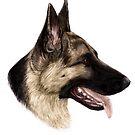 Deutscher Schäferhund von yungbean