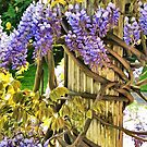 Wysteria Climbing by PictureNZ