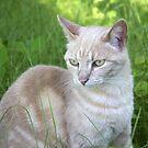 Tabby Cat by Elizabeth  Lilja