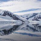 Neko Harbour, Antarctica by Braedene