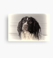 One more of Molly,,,,,,Exeter Devon UK Canvas Print