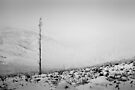 Deforestation - Northumberland by David Lewins