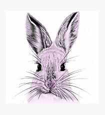 What's Funny Bunny? Photographic Print