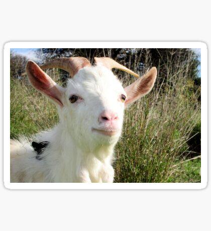 Goat Portrait Sticker