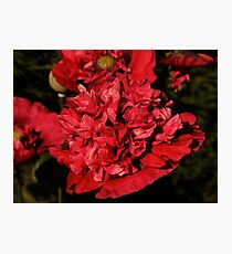 Double Red Photographic Print